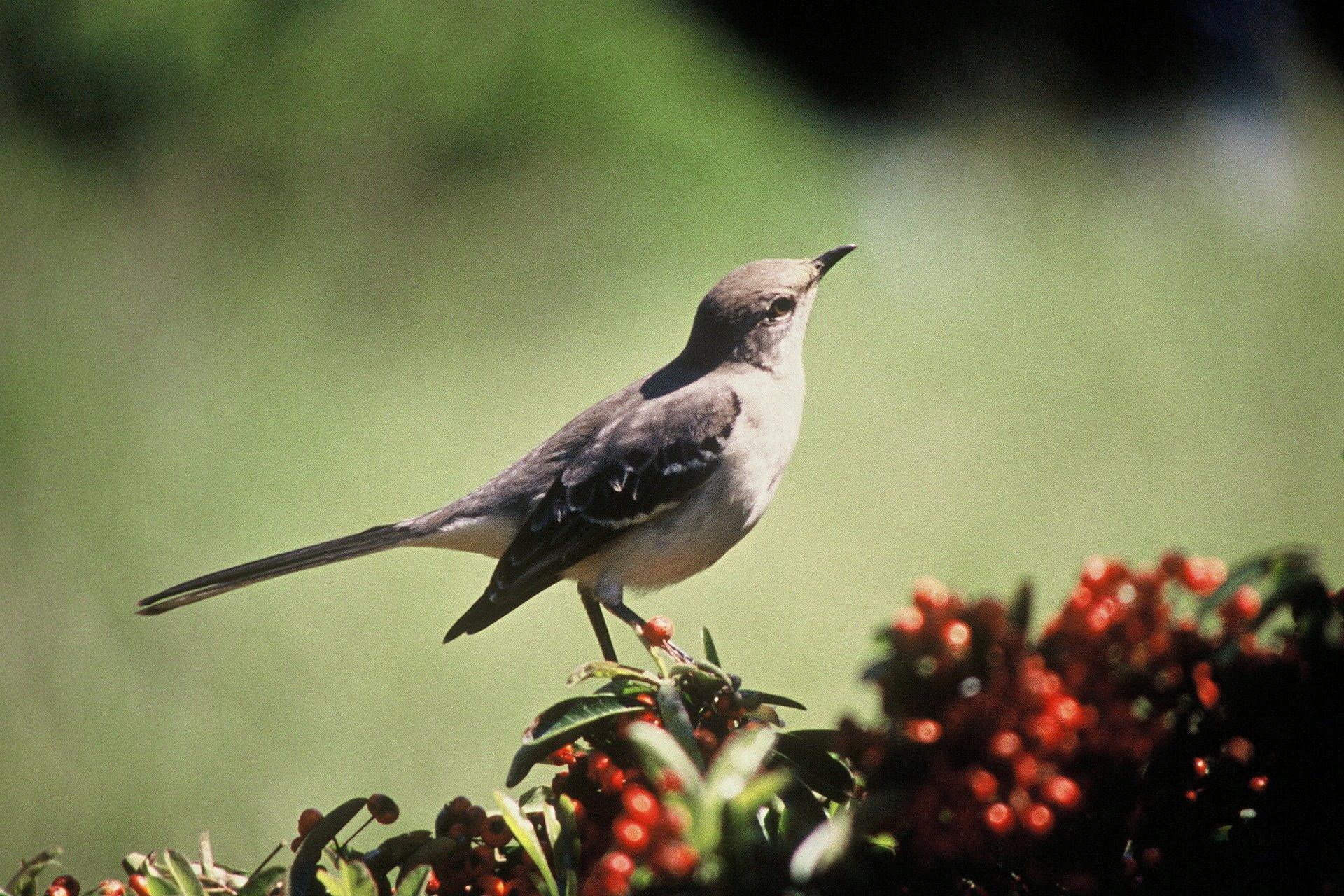 naturelax oiseaux du paradis mp3 sons de la nature gratuit. Black Bedroom Furniture Sets. Home Design Ideas