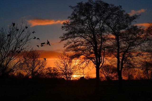 chant des oiseaux pour la relaxation et la détente